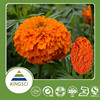 /product-gs/free-sample-offered-100-natural-marigold-extract-lutein20--229517922.html