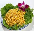 Alimentos exportador de alimentos sanos comida enlatada mazorca de maíz dulce en