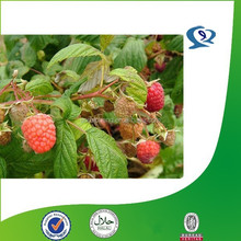 raspberry powder extracts, rubus chingii hu p.e., rubus chingii hu extract