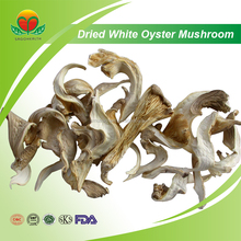 Manufacturer Supply Dried White Oyster Mushroom