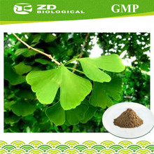Nature flavone 24%, lactones 6% , Ginkgo Biloba Leaf powder Extract