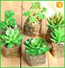 Hot selling mini artificial plant succulent plants