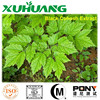 black cohosh extract powder/black cohosh extract/black cohosh powder