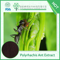 High Purity Men's sex product polyrachis ant extracts, polyrachis ant powder, ant pure powder 2015 hot selling