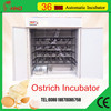 /product-gs/newest-egg-machine-hold-36-ostrich-eggs-for-hatching-ostrich-eggs-for-sale-60245033957.html