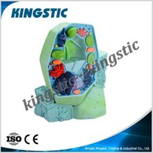 Plant cell model 2 parts