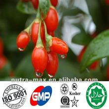GMP Factory Wolfberry Extract Powder