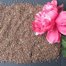 Zi su zi wholesale price and natural for100% Natural Purple Perilla Seed