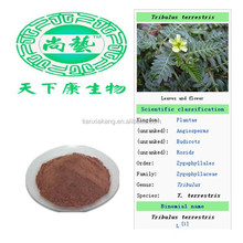 Sex enhancement for men Tribulus 90% Saponins 40% Protodioscin/100% Natural Tribulus Terrestris Extract Powder Saponins