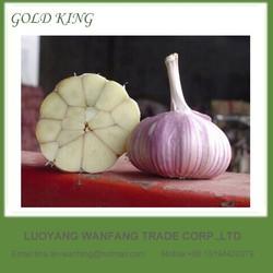 Natural fresh garlic to Japanese market