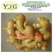2013 new crop fresh ginger for all market
