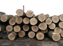 european oak log for sell
