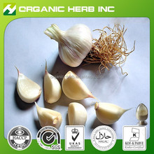 High quality active garlic extract