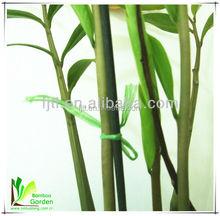 Alta qualidade venda quente rodada de bambu seco varas de flores
