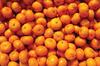 Chinese baby honey citrus fruit mandarin oranges