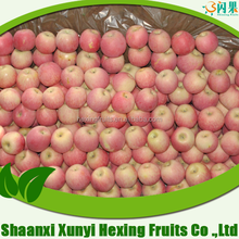 wholesale fruit prices of fuji apple