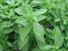 Hot Sale High Quality Organic Stevia Extract,Sweet Stevia,Stevia Sugar