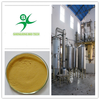 100% pure natural ginger extract powder