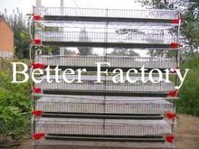 Bt factroy caliente- venta de alta calidad de malla de alambre capa de codorniz jaulas para la venta en uganda