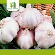 china high quality fresh garlic garlic price in china for wholesales