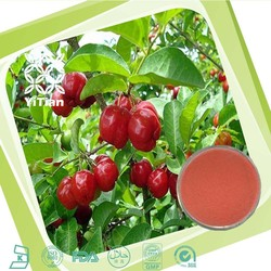 100% Natural Indian Cherry Fruit Extract Powder