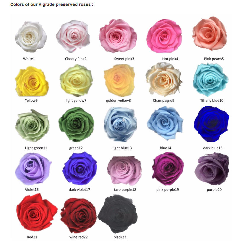 Color Lits.png