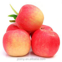 fresh sweet shandong red fuji apple supplier