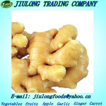Largest exporter of thai fresh ginger