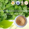 /p-detail/a-base-de-hierbas-mayorista-de-productos-naturales-de-suministro-de-extracto-de-ortiga-300005478338.html