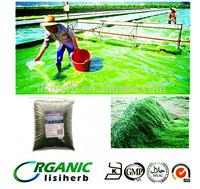 Healthcare Supplement 100% pure Organic Spirulina powder/ Spirulina powder in bulk