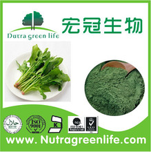 factory supply vegetable powder spinach powder Base dehydration spinach powder