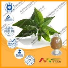 ISO&GMP Green Tea extract powder(EGCG/Polyphenols)