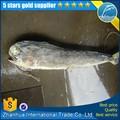 Seafrozen bonito de pescado con precios baratos