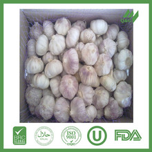 fresh cheap pure snow garlic exporter