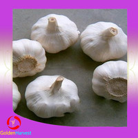 The most popular fresh natural red garlic with best price for sale