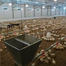 Buen precio pollo comederos y bebederos para granja avícola