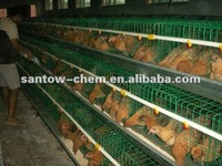 automatic chicken house for layer