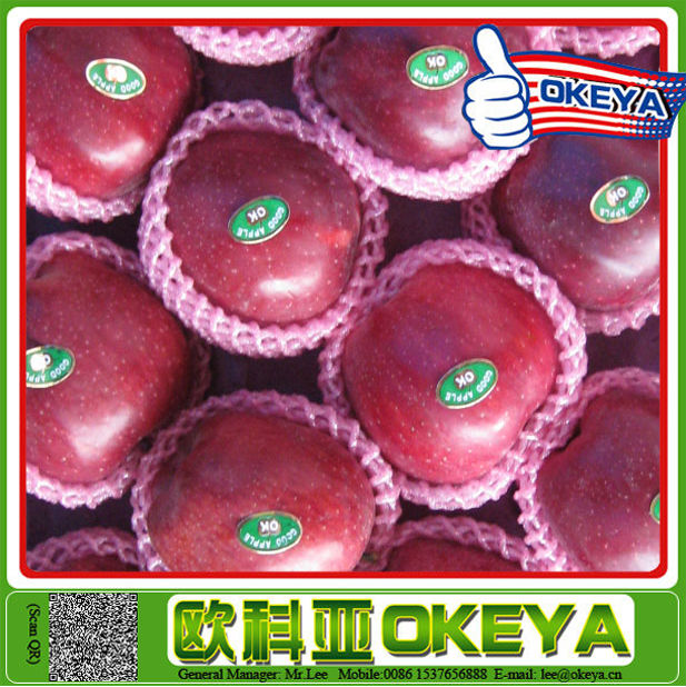 TOP SELLING!! Cheap Prices red fuji apple with low price and high quality