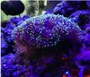 Good aquarium corals, hot sale 120w led coral reef aquarium lights with CE FCC ROSH