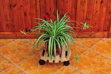 round garden wood plant dolly, wood flower pot & planter carrier ALS-4141