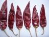 American Red Chili red chili red hot chili