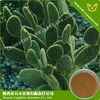 Opuntia Stricta Extract Used For Suffering From Stomach Pain