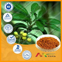Best selling health products Loquat Leaf Extract
