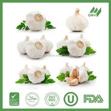 High quality fresh garlic seller