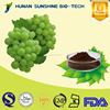 Low Price Proanthocyanidin 95% / Grape Seed Extract for antioxidant & antifatigue.