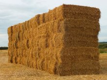 Animal Feed Direct from Canada Farm to Your Port