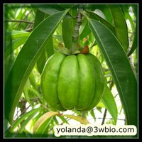 Malabar tamarind Extract HCA