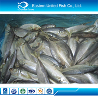 China Seafood Export Horse Pacific Atlantic Mackerel