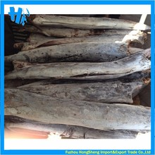 New coming super frozen sailfish factory