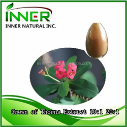100% pure natural plant extracts Crown of Thorns Extract 10:1 20:1
